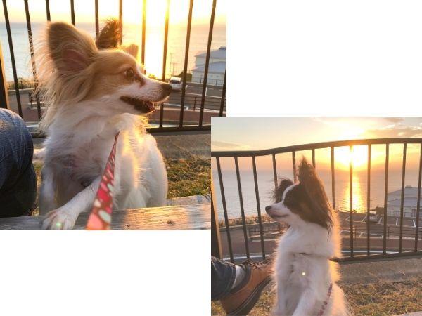 長崎、道の駅、夕陽が丘そとめの夕日、犬と一緒