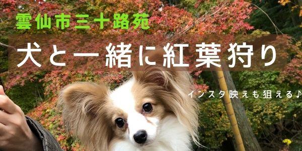雲仙市三十路苑で犬と紅葉狩り