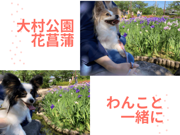 大村公園花菖蒲with2わん
