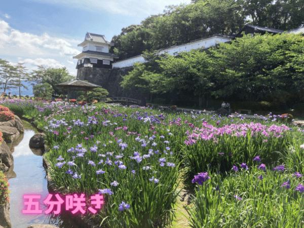 大村公園板敷櫓五分咲き1