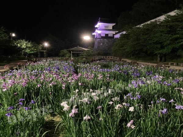 大村公園板敷櫓夜景